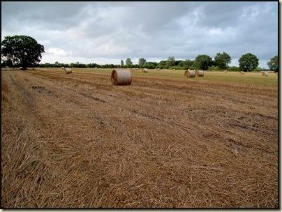 Cheshire Hay