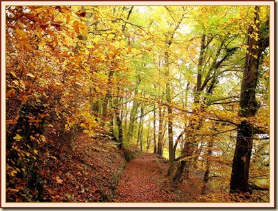 Autumn leaves above Litton Mill