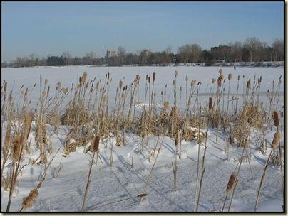 The Ottawa River near Westboro - 24/1/11