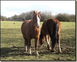 Horses near Moorside
