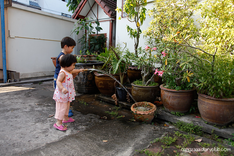 ผลการเรียน รดน้ำต้นไม้