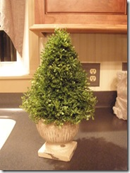 boxwood tutorial 021