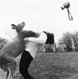 kangaroo,animals,black,and,white,funny,humor,animal-140024b3f1ac97301a97d23f69215324_h