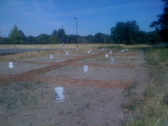 We have created paths at our test plot.
