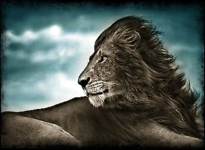 leon en la tormenta