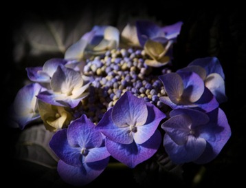 blue_flower_by_Marie_Ange