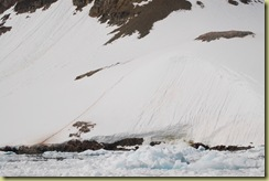Penguins living up cliff