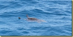 Turtle at Big Sea Yol