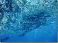 Fish sheltering