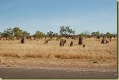 Termite Field
