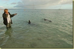 Explainer and Dolphins