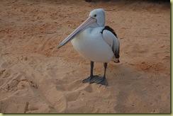 Pelican two