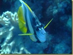 Trigger Fish 2