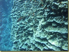 10m coral layer