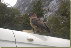 Kea on Van