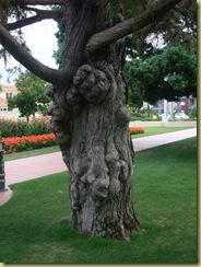 Trees Square