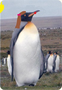 King%20Pinguin%20-%20Bold%20at%20Volunteer%20Point