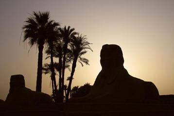 Sphinx à Louxor (Luxor)