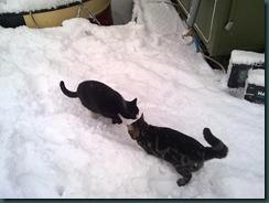 snow day 048