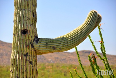 4. Cactus close up