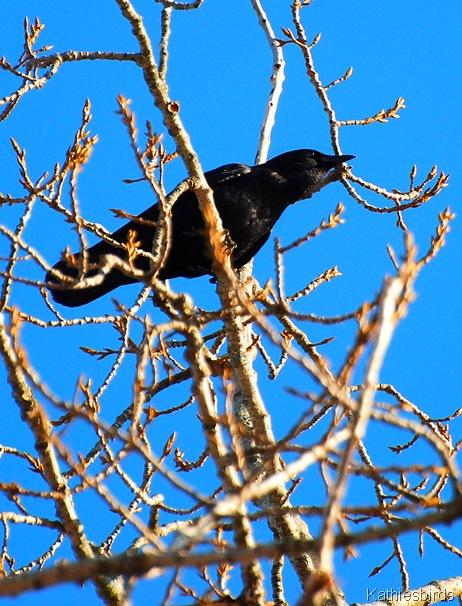 6. Crow Kathie