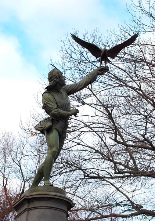 1. The Falconer kathiesbirds