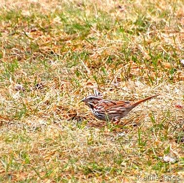 5. sparrow-kab