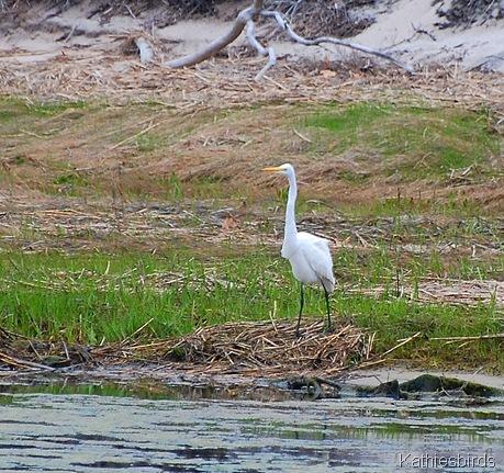 10. egret-kab
