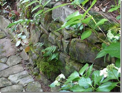close up of rock wall (2)