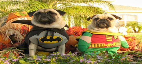 batmanandrobinpugs