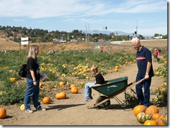 pumpkin patch 055