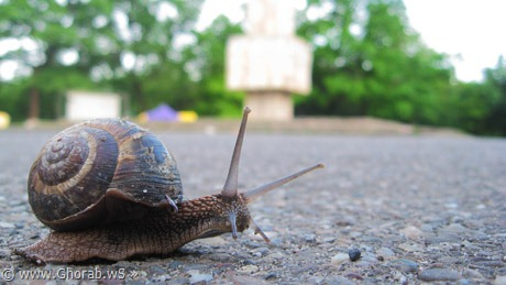 Snail - الحلزون