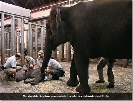 bebe-elefante-australia-2-550