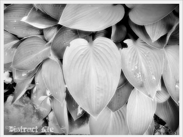 {Love Thursday}