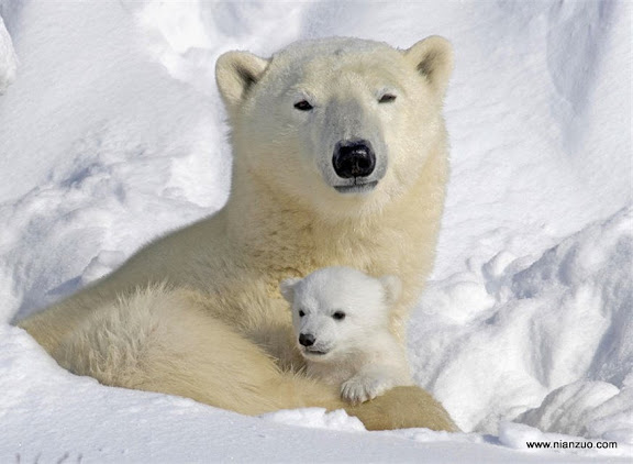 猛兽母子情 看那慈祥的眼神,要是你敢靠近,一把拍死你