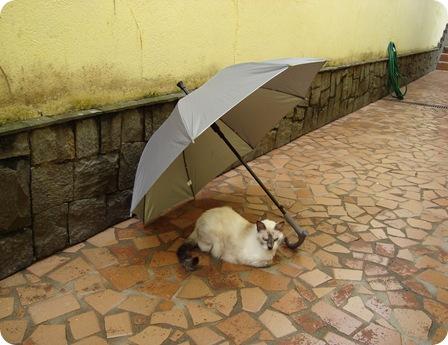 lili e o guarda-chuva