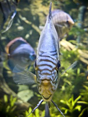 Дуже серйозна риба