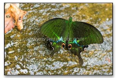 TMKH_058_thommankuth_kerala_keralapix.com_DSC0102