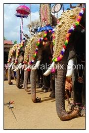 TPRA_036_DSC0189_www.keralapix.com_kerala