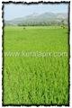 PLKD_006_www.keralapix.com_DSC0008
