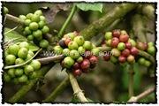 NLPY_029_www.keralapix.com_DSC0084