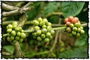 NLPY_030_www.keralapix.com_DSC0085