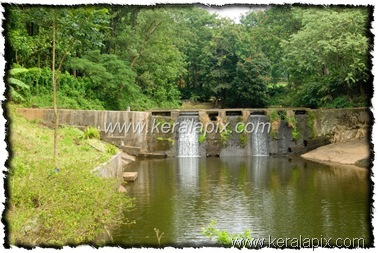 NLPY_037_www.keralapix.com_DSC0102