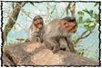 NLPY_061_www.keralapix.com_DSC0126