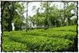 NLPY_043_www.keralapix.com_DSC0108