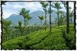 NLPY_050_www.keralapix.com_DSC0232