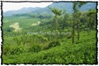 NLPY_053_www.keralapix.com_DSC0251
