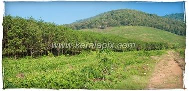 CHMNY_007_www.keralapix.com_DSC0031_DSC0033