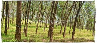 CHMNY_005_www.keralapix.com_DSC0024_DSC0025
