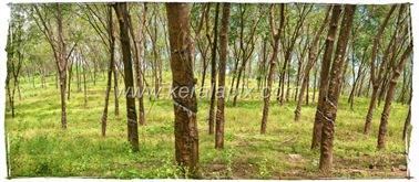 CHMNY_004_www.keralapix.com_DSC0019_DSC0020
